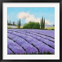 Framed Essence of Provence II