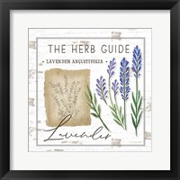 Framed Herb Guide - Lavender