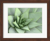 Framed Pointed Cactus