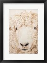 Framed Woolly