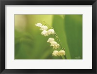Framed Lily of the Valley