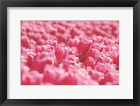 Framed Pink Field