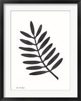 Framed Watercolor Black Plant II
