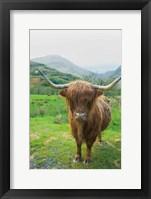 Framed Scottish Highland Cattle VI
