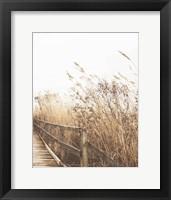 Framed Autumn Grasses