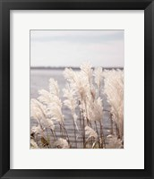 Framed Pampas Grass