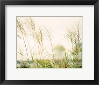 Framed Summer Grasses