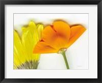 Framed Flower Friends
