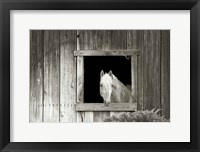 Framed Welcome Mare