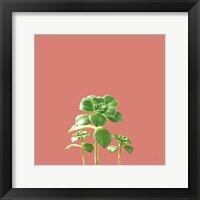 Framed Succulent Simplicity IX Coral
