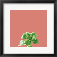 Framed Succulent Simplicity VII Coral