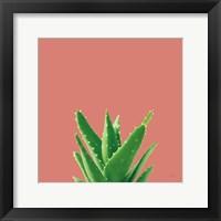 Framed Succulent Simplicity V Coral