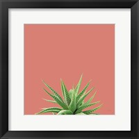 Framed Succulent Simplicity I Coral