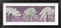Framed Morning Chrysanthemums V Lavender