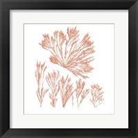 Framed Pacific Sea Mosses XXI Red Sq
