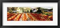 Framed Golden Vineyard