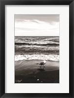 Framed Seagull I