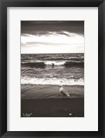 Framed Seagull II