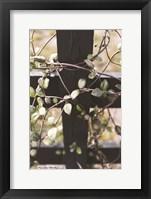 Framed Fence Vine