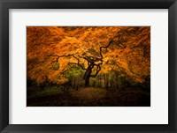 Framed Japanese Maple In Kubota Gardens Park