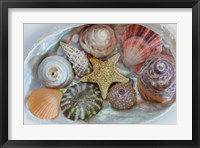 Framed Collection Of Pacific Northwest Seashells