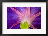 Framed Neon Colors Of Morning Glory