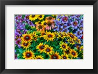 Framed Painted Tongue And Hirta Daisies In Tight Grouping