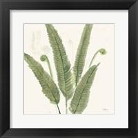 Framed Forest Ferns II Dark