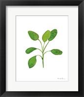 Framed Fresh and Green VII