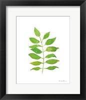 Framed Fresh and Green IV