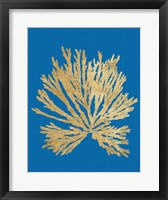 Framed Pacific Sea Mosses II Blue