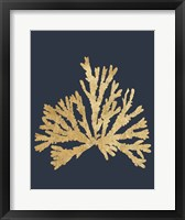 Framed Pacific Sea Mosses IV Indigo