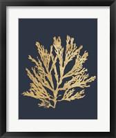 Framed Pacific Sea Mosses I Indigo