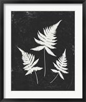 Framed Forest Shadows IV Black Crop