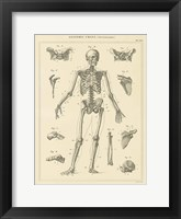Framed Skeleton Chart
