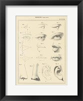 Framed Face Chart