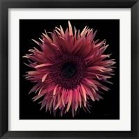 Framed Floral Majesty IX