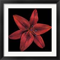 Framed Floral Majesty VIII