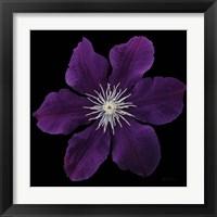 Framed Floral Majesty VII