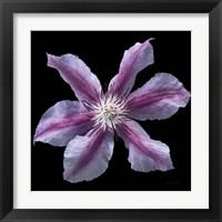 Framed Floral Majesty VI