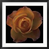 Framed Floral Majesty V