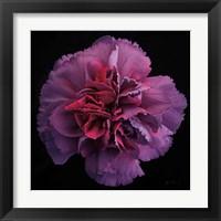 Framed Floral Majesty IV