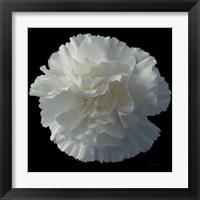 Framed Floral Majesty III