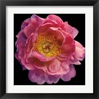 Framed Floral Majesty II