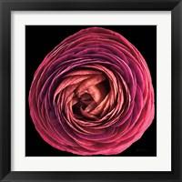 Framed Floral Majesty I