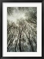 Framed Light through the Trees