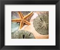 Framed Sand Dollars And Starfish