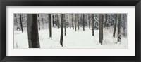 Framed Chestnut Ridge Park Orchard Park NY