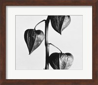 Framed Twig With Seed Pods