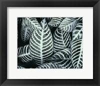 Framed Zebra Leaves